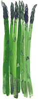 Hand drawn image of Asparagus