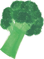 Hand drawn image of Broccoli