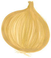 Hand drawn image of Onion