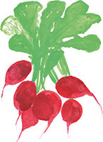 Hand drawn image of Radish