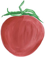 Hand drawn image of Tomato