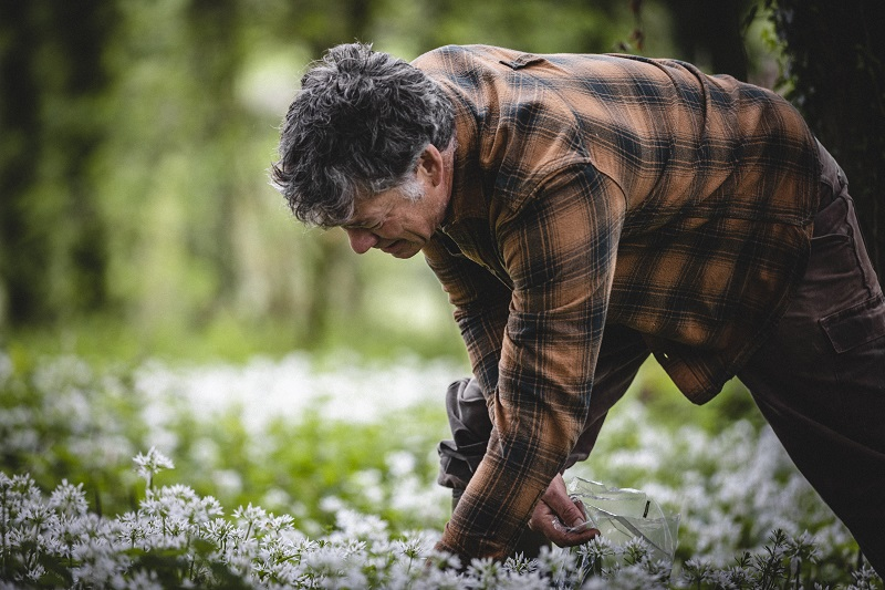 Guy Watson-Singh picking wild garlic on Riverford's Wash Farm.